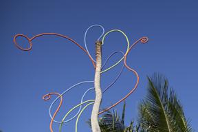 Rebirth of Dorado's Palm Trees